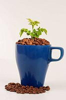 blue cup with plant