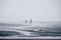 sea,Foreshore