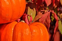 Detailed Pumpkin Red Leaves in Background