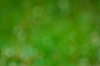 Flesh green bokeh