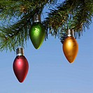 Ornaments on tree.