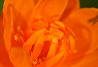 red-orange flower