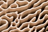 Close-up abstract of the intricate pore structure of an oak mazegill fungus (Daedalea quercina) showing the widely-spaced gill-like ridges attached to...