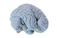 Brain Specimen