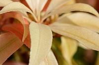 White Flower Blossom