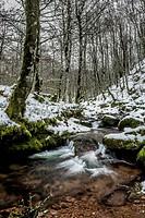 Arce Forest, Arce Valley, Navarre, Spain.