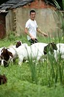 (150625) -- FEIXI, June 25, 2015 () -- Shepherd Zhang Jianjun pastures his goats in Huagang Town of Feixi County, east China's Anhui Province, June 24...