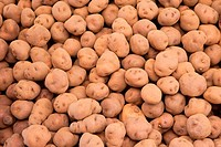 potatoes harvest background