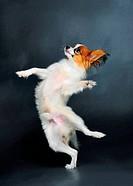 puppy dancing