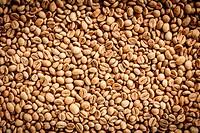 Kopi Luwak or civet coffee