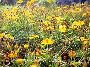 close up field of flowers