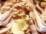 fresh chanterelle mushrooms closeup on a market