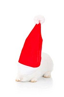rabbit wearing a santa hat