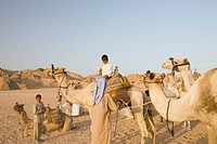 Bedouins and their camels in the Sinai Desert near Dahab in Egypt.