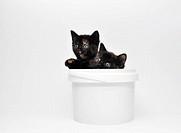 two kittens in a bucket