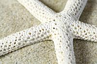 Close-up view of a starfish