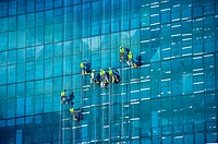 Abseiling window cleaners descend on ropes down the glass structure of a high rise building. Cape Town, South Africa.
