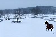 Horse, Horses, winter, snow, running