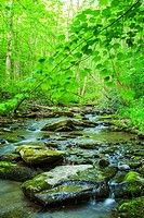 Greenbrier Area, Great Smoky Mountains National Park ,TN.