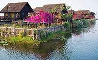 Beautiful flowers bloom at Garden Island Cottages on Inle Lake.