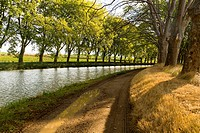 EU, France, Ventenac. The tow path alongside the Canal du Midi, lined with plane trees, in Southern France. The Canal du Midi connects Toulouse in the...
