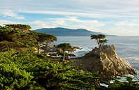Pebble Beach California famous Lone Elm cypress tree and ocean on 17-mile drive one of the most photographed trees in North America.