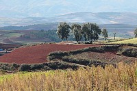 Terrace cultivation, Red lands, Dongchuan District, Kunming municipality, Yunnan Province, China