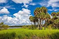 Myakka River State Park in Sarasota FLorida.