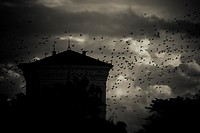 Flock of birds flying past building at night with storm clouds in the background. Dark, moody and spooky setting with wildlife at twilight.
