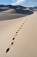 Saguache County, Colorado: Footprints along High Dune at Great Sand Dunes National Park and Preserve. In the distance is Mount Herard in the Sangre de...