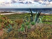 Tenerife wild coast in Hidalgo.