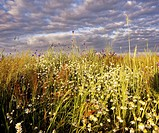 Poland. Podlasie region. Meadow