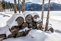A stack of firewood sits by small trees in winter by a lake in north Idaho.