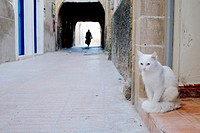 The cats on the alleys of Essaouira.