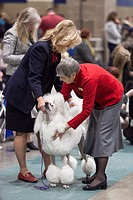 Seattle, Washington: Judge Jan Brutton examines a Standard Poodle in the ring at the 2017 Seattle Kennel Club Dog Show. Approximately 160 different br...