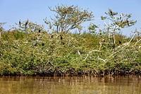 Bird Island, Lake Ziway, Ethiopia.