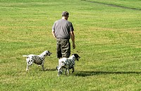 The man is walking his dogs.