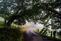 Rural setting in Cantabria. Spain. Europe.