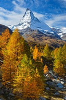 Matterhorn and larch tree forest in autumn, Vallais, Switzerland.