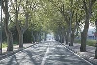 Tree Lined Road, San Antonio, Ibiza, Spain.