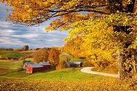 Orange and Yellow Maple Trees at dawn over the Jenne Farm near Woodstock, Vermont, USA.