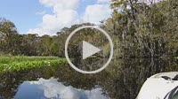 Sanford Florida boating on the St John's River in relaxed calm waters with cypress trees and moss from the boat 4K,
