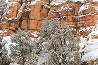 Red Canyon in winter with fresh snow, Dixie National Forest, Red Canyon, Utah, USA.