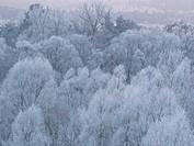 Poland. Winter. Podlasie (Podlachia) region