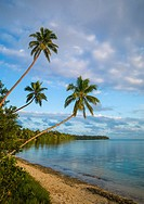 Coconuts trees in front of a turquoise water and white sand on Erakor beach, Shefa Province, Efate island, Vanuatu.