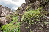 Iceland - Thingvellir, the rift valley that marks the crest of the Mid-Atlantic Ridge and the boundary between the North American tectonic plate and t...