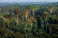 Amazon Forest. Manu National Park. Peru