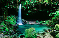 Emerald Pool. Morne Trois Pitons National Park. Dominica (UK). West Indies