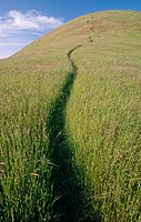 Uphill foot path through field of grass. Northern California. USA