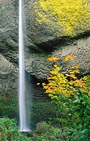 Latourell Falls with Vine Maple. Columbia River Gorge National Scenic Area, Oregon. USA